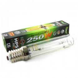 ampoule 250w