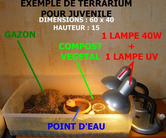 ampoule uvb tortue